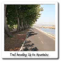 Image of bicycle trail looking up